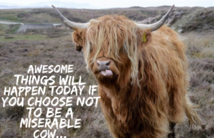 Do not be a miserable cow…life is too short